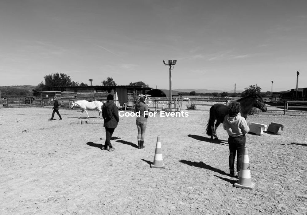good for events - Equi Coaching