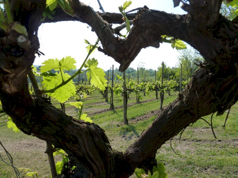 Fiche Caviste - My Love Is Wine